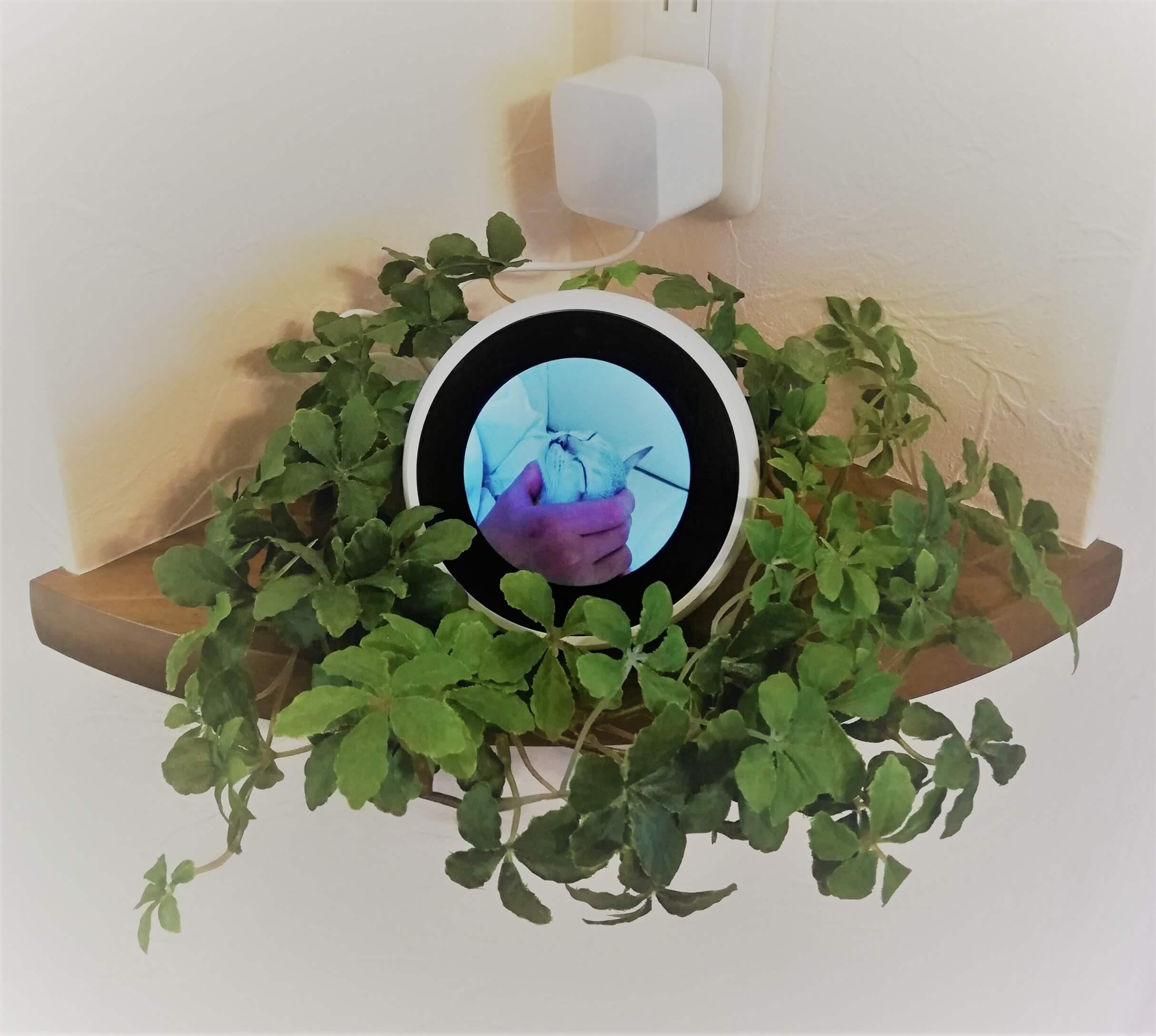Amazon Echo Spot の画像